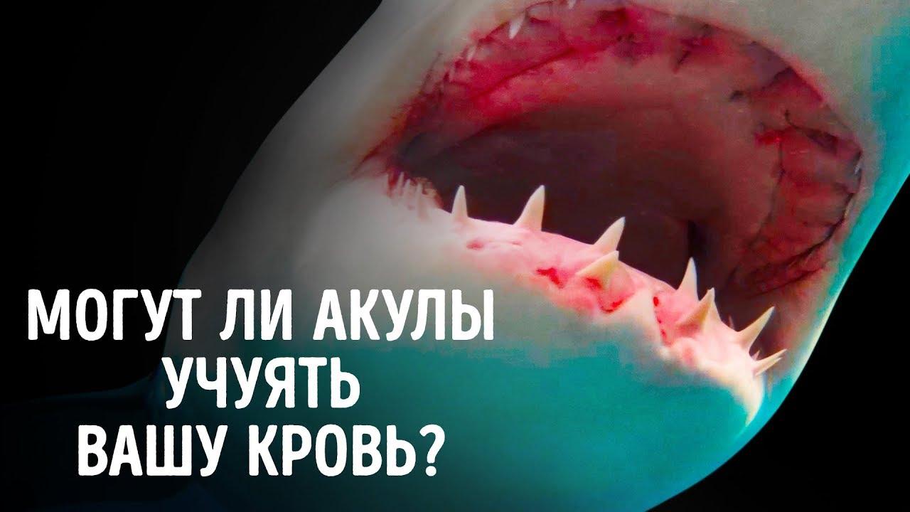 Могут ли акулы учуять кровь за несколько километров?