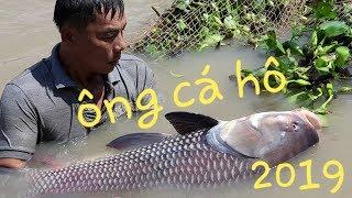 Cá Hô khổng lồ xuất hiện tại Sóc Trăng, loài cá có thể đạt vài trăm ký | Săn bắt SÓC TRĂNG |
