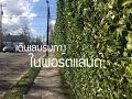 เดินเล่น ริมทาง เมืองพอร์ตแลนด์ - Walk in Portland  | TheWandererAsia