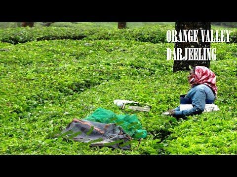 Orange Valley, Darjeeling, West Bengal