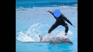 모든 고래류 전시/공연/체험을 금지시켜야합니다