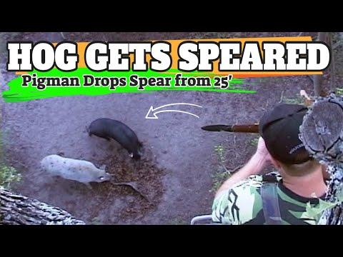[RARE FOOTAGE]  Pigman SPEARS Wild Hog From 25' Up A Tree During Original 2006 Pigman Pilot!!!