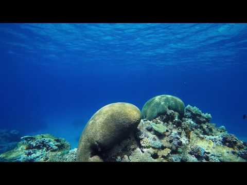 Snorkeling at Nece, on Mare Island, New Caledonia