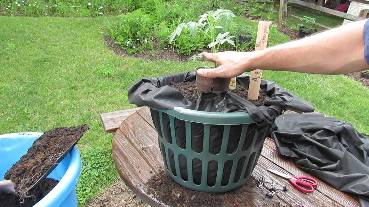What Is Root Air Pruning U0026 How To Make A Cheap Tomato Air Pruning Container:  TRG 2014   YouTube