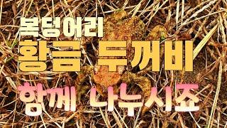 제부도연꽃농장에 찾아 온 복뎅이 황금두꺼비, 복복복 복…