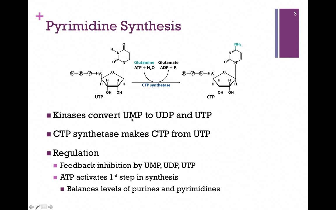 pyrimidine synthesis Chemtube3d contains interactive 3d animations for some of the most important organic reactions covered during an undergraduate chemistry degree.