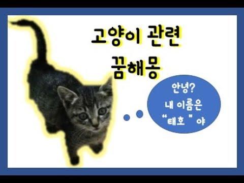 고양이 관련 꿈해몽 하얀 고양이꿈 등등 sub add [재미있는 꿈해몽 이야기]