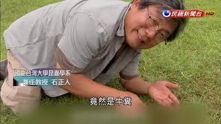 科學再發現-聖甲蟲解謎 野外清道夫推糞金龜-民視新聞