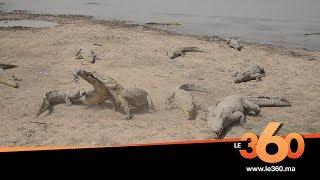 Le360.ma •Burkina: Le360 au coeur du village des crocodiles sacrés