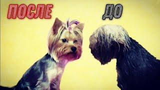Правильный уход за шерстью собаки