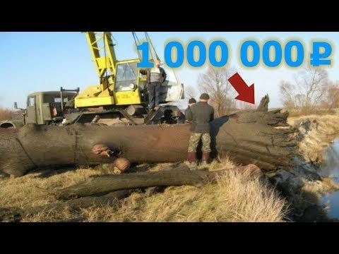 Почему у древних зодчих не гнили cрубы: секрет, которому тысяча лет