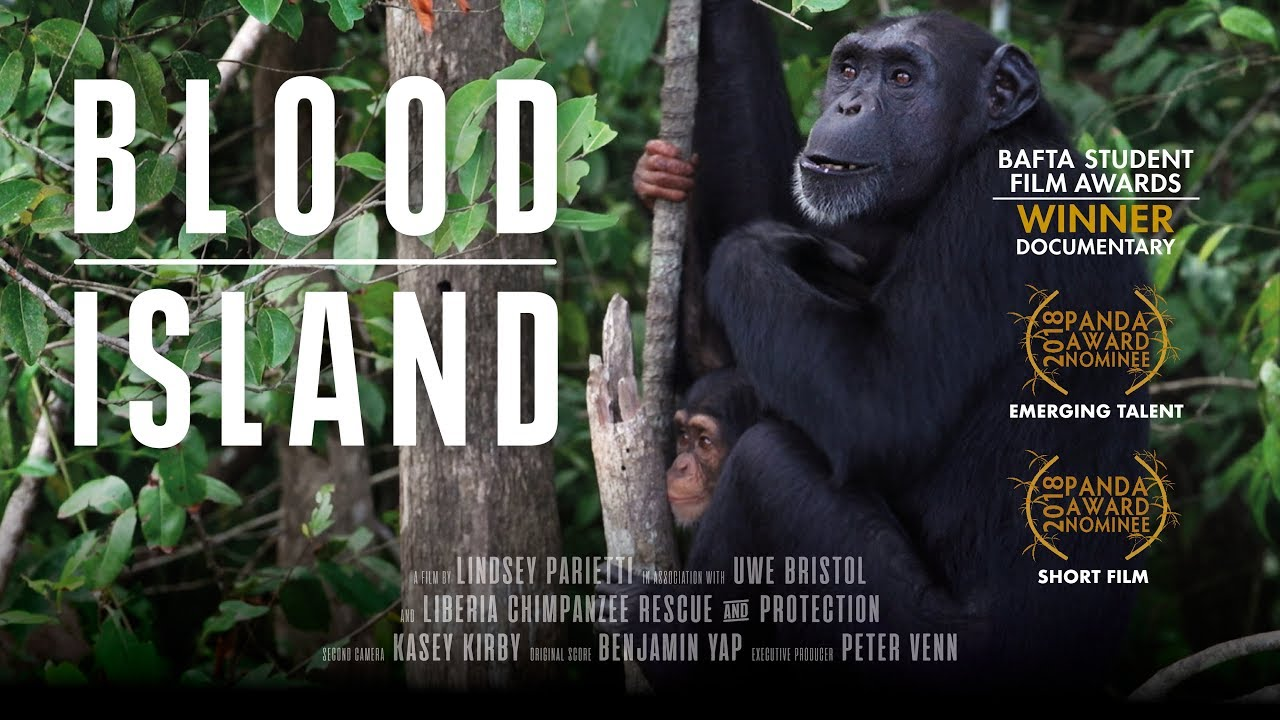 Image result for blood island film
