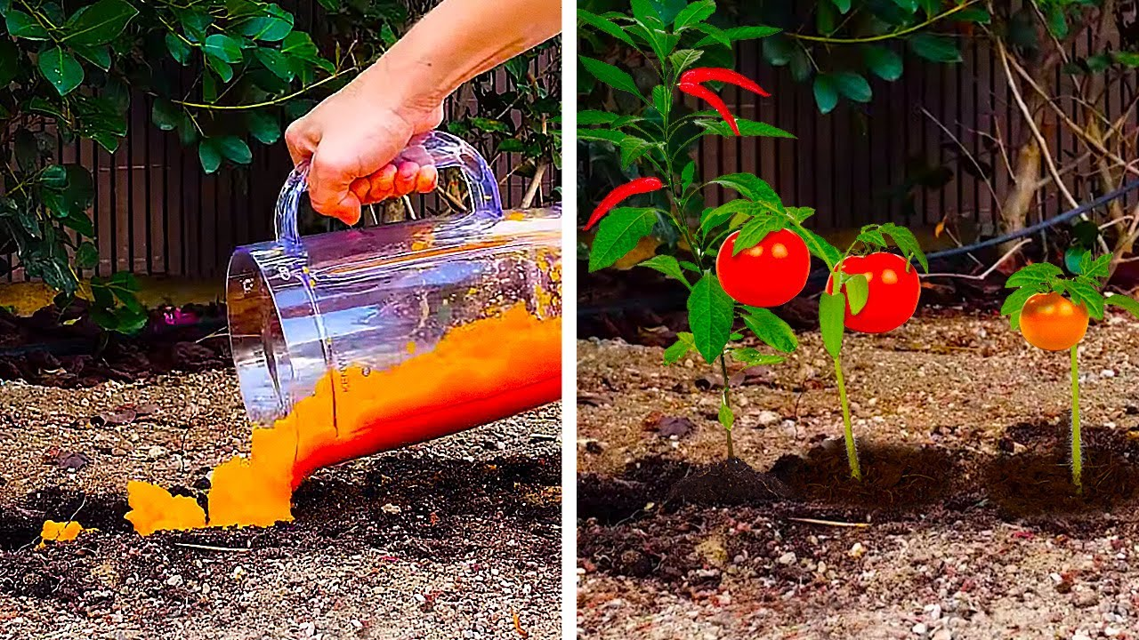 Download 24 PLANTING LIFE HACKS TO GROW A GREAT GARDEN