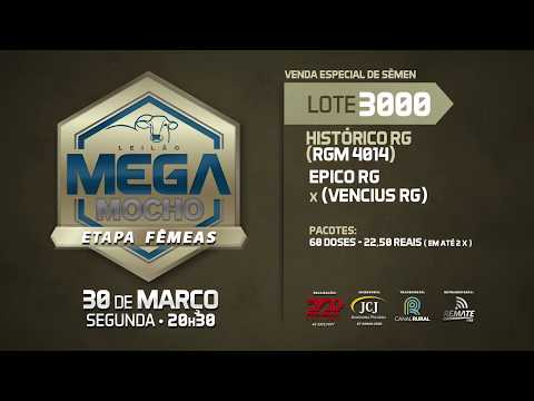 LOTE 3000