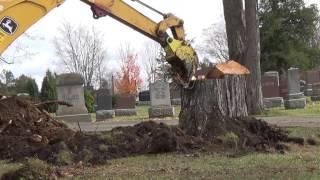 Stump removal regular speed