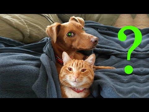 Чем кот пес занимаются за 29 августа