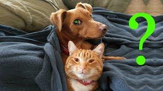 Чем кот и пес занимаются дома, пока хозяева на работе?