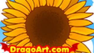 How to Draw a Sunflower, Draw Sunflowers, Step by Step