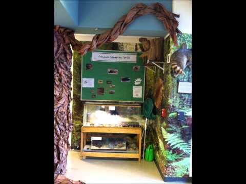 The Living Wedge Project/Matoaka Elementary School