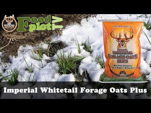 The Great Outdoors - Fall Food plots! Make your deer better!