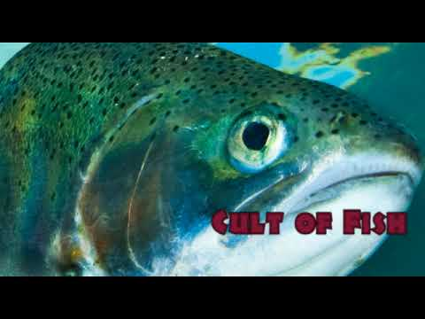 Cult of Fish