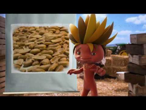 Taami- Nuts