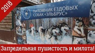 Трейлер: Питомник ездовых собак Эльбрус