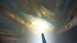 НАШЕЛ ХОРОШИЙ ПРОЗРАК,СУДАКОВ И САЗАНА.Подводная охота декабрь  2019.spearfishing