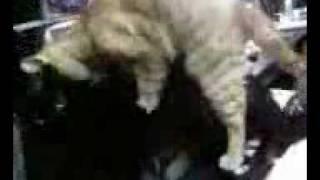 gay cat porn