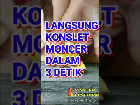 #lbkonslet #masteranpaut koncer ngekek dalam 3 detik