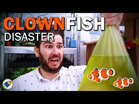 Adding ClownFish To Budget Nano Reef Tank | Reef Tank Fish For Beginners - MR BRIGHTFRYED