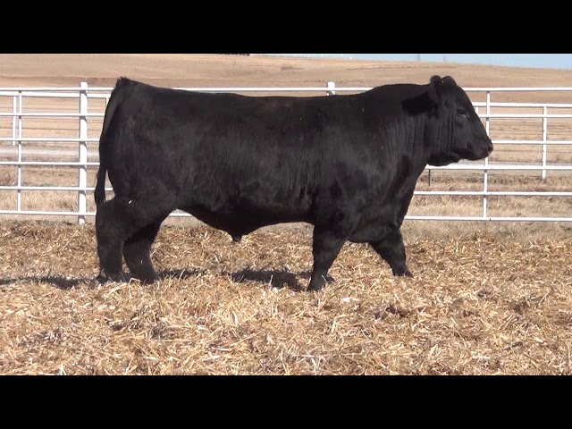 Express Ranches Lot 93