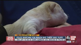 Tampa Police Looking For Person Who Threw Away Days-old Puppy