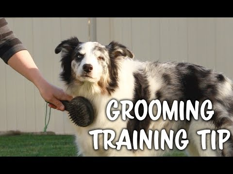 Grooming tip - practice the right pressure - Dog training