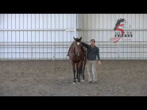 how to teach a horse to lay down for mounting