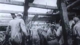 Война на море 01. Авианосцы времен Второй мировой войны