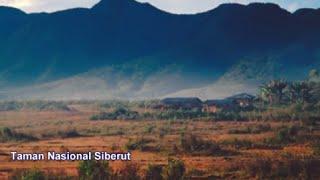 Taman Nasional Siberut Permata Hijau Penuh Keajaiban