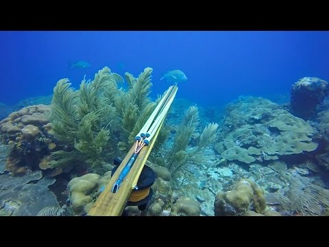 Reef Spearfishing 2016. Dog Snappers & Grouper