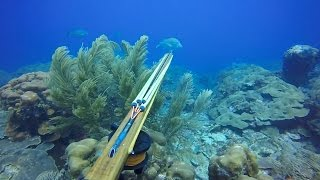 Gambar cover Reef Spearfishing 2016. Dog Snappers & Grouper