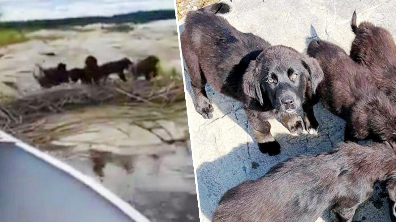 Download 7 Puppies Rescued from Remote Island During 'Operation Gilligan's Island'