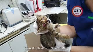 Киев. Слепой котенок #Обик спасен нашими читателями и доставлен командой дтп.Киев в Рыжий Кот. Начат