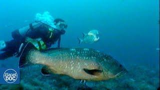 Cabrera Sea Bottom . Balearic Islands - Part 3