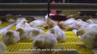 Système colonie BroMaxx pour poulets de chair