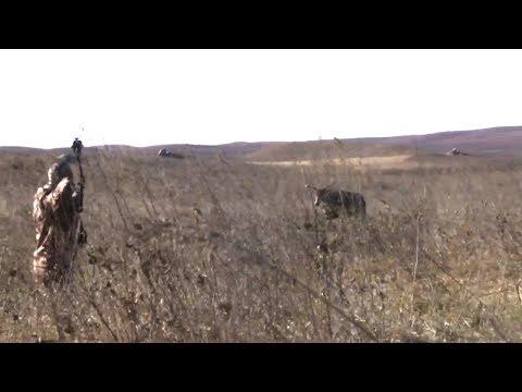 Stalking Monster Whitetail Bucks In South Dakota