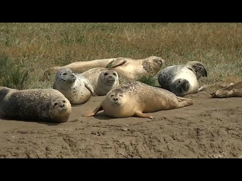 France 24:Watch: Promising signs for the Thames's seal population