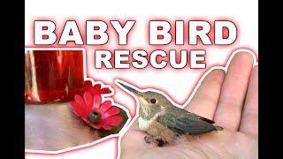 I saved a baby humming bird!