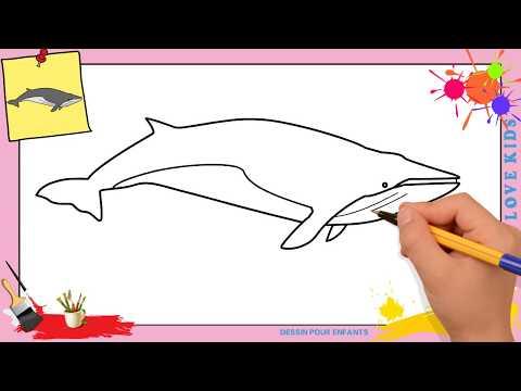 Comment Dessiner Une Baleine