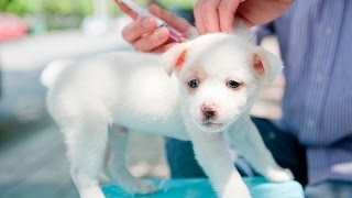 What Is the Recommended Rabies Vaccination Schedule for Puppies?
