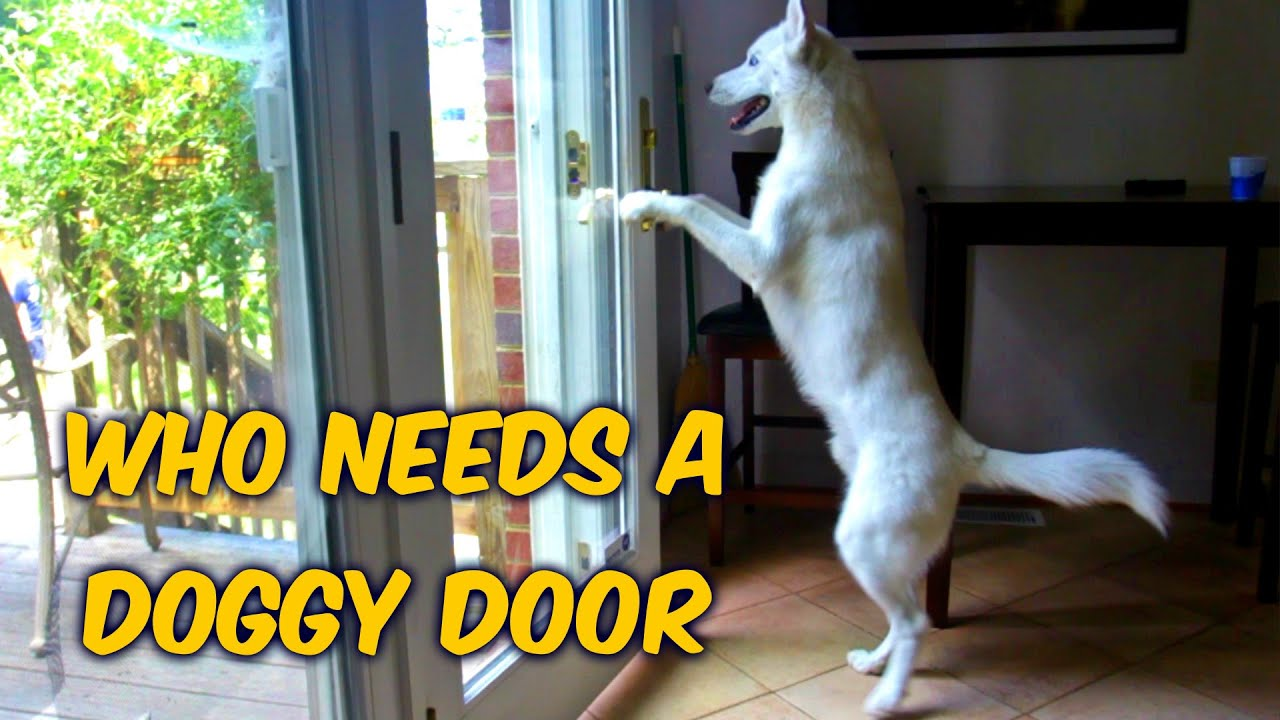 & Who Needs a Doggy Door? - YouTube
