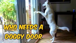Who Needs a Doggy Door?